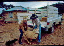 Doc McNeal and Leo Greyeyes both working on NSP, and unloading sheep and delivering to Leo's parents at Tsegi, AZ in 1984.