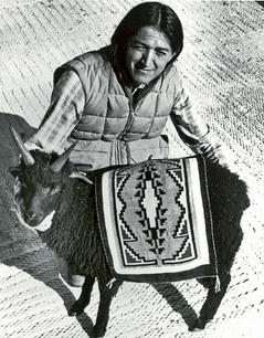 USU Animal Science student, and Navajo Sheep Project assistant, Leo Greyeyes holding a young 4-horned ram lamb of the Navajo Sheep Project nucleus flock and Two Grey Hills tapestry in 1982 near Wellsville, Utah on the USU Animal Science Farm.