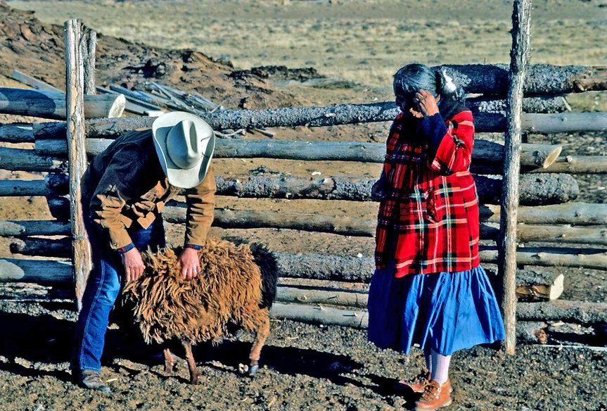 1980 - CLARA SHERMAN SHEEP _ DOC NEWCOMB