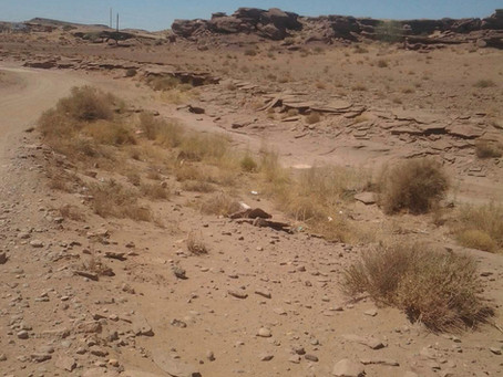 Drought Continues For Navajo-Churro Shepherds