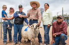 Doc McNeal, Head Judge, and Assistant Judges, Tara Roche, Colleen Biakeddy presenting Grand Champion Ram Award at annual Sheep Is Life Celebration at Dine' College, Tsaile, AZ during 2014 event.