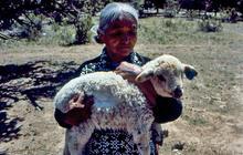 Elsa Natan holding one of her lambs on Ramah Navajo Reservation (1989).