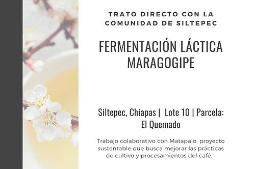ML10 Matapalo | WBrC | [Floral]