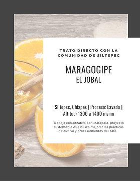 ML03 El Jobal | Maragogipe | [Brown]