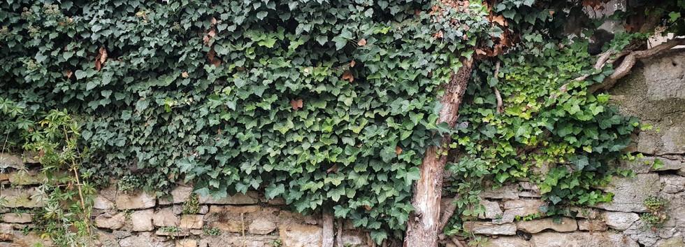 Stützmauer mit Vegetation