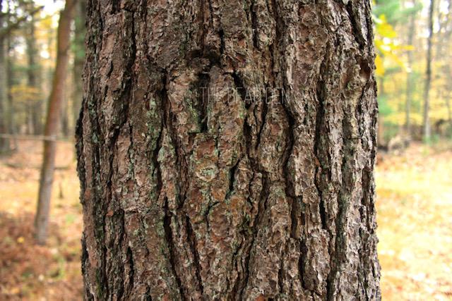 Bark- 5
