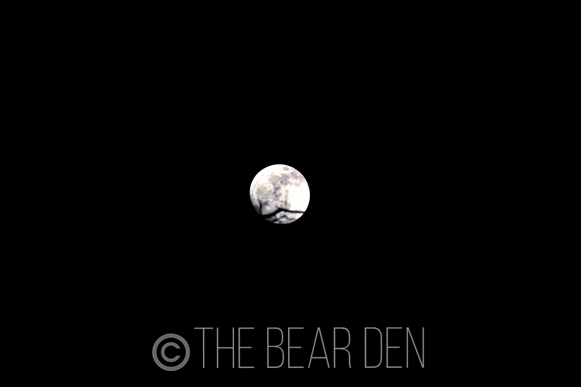 Dark Moon - 2