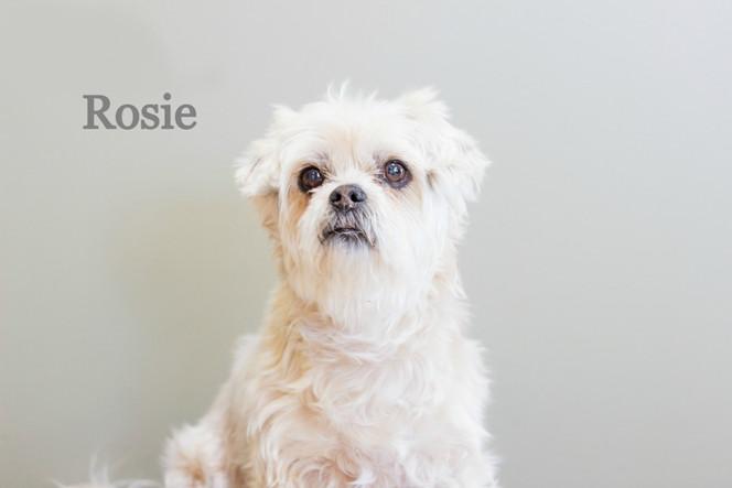 Rosie_edited_edited.jpg