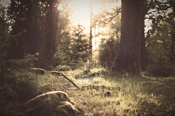 Forest%20Grass_edited.jpg
