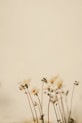 Pale%20lemon%20flowers%20with%20blank%20space_edited.jpg
