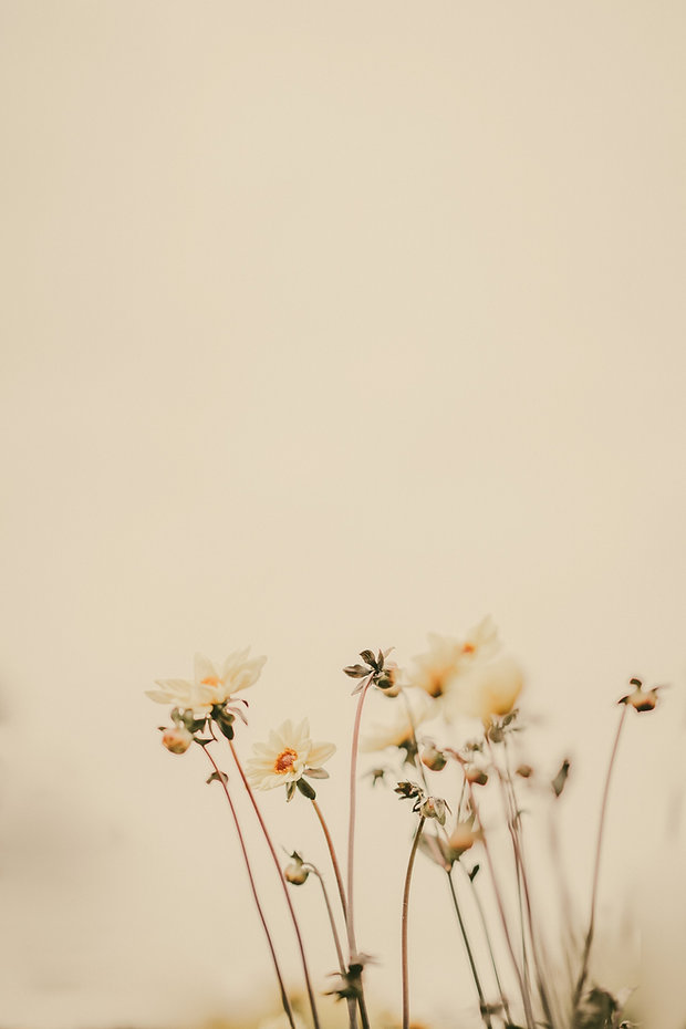 Pale%20lemon%20flowers%20with%20blank%20
