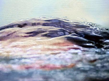 Dans l'eau vive des brouillons, l'élan des ratés & des ratures