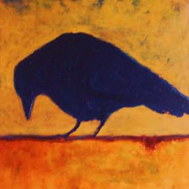 Solo Crow.jpg