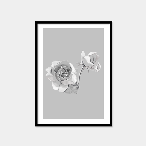 White And Grey Roses