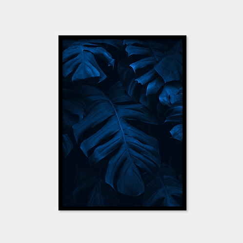 Blue and Black Monstera