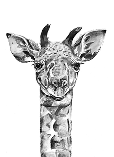 giraffebw.png
