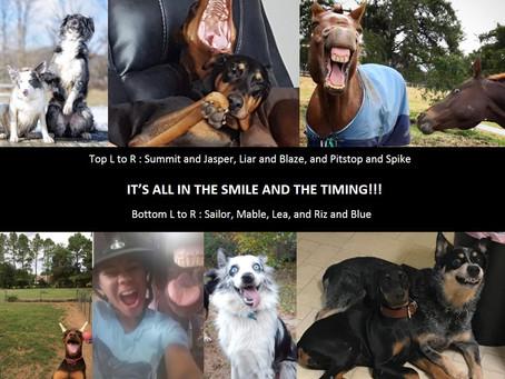 Animals - Their lighter side! Issue : 01-05292019
