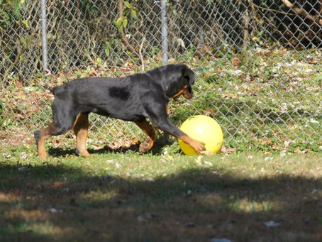 Fencing for canines! Just a few thoughts...