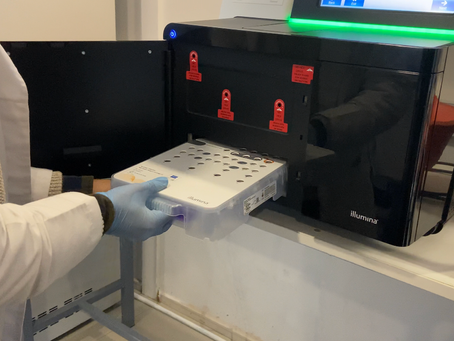 MELISA Institute performs the first massive sequencing of new COVID-19 variants in the Biobío