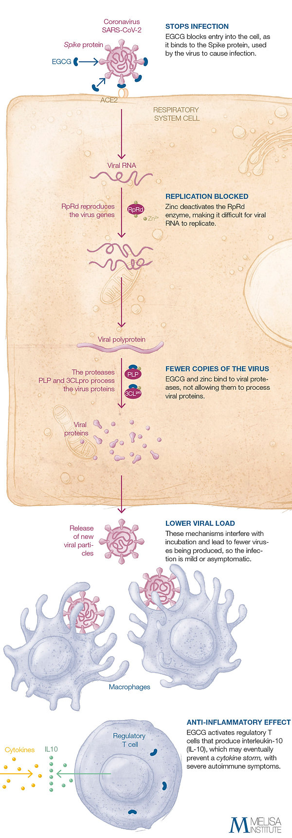 infografia-covid-02_ENG.jpg