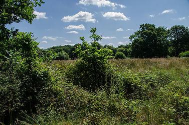 wild undergrowth.jpg