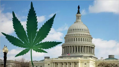 Trump and The DEA Make The Choice To Shake Up Marijuana Politics