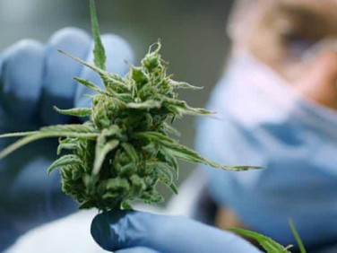 Lake Superior State University in the U.S. created a new ``Cannabis Chemistry Scholarship for the fi