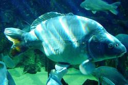 1.Aquarium