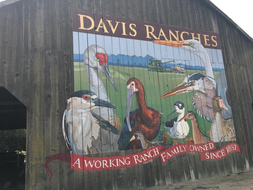 Davis Ranches