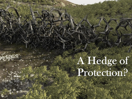 A Hedge of Protection?