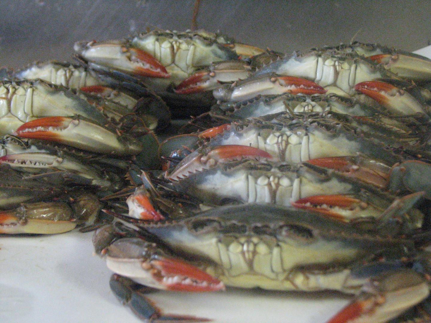 fish 183.JPG