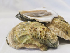 Mystic Oysters (4).jpg