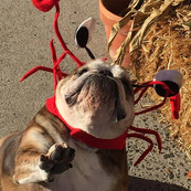 gus with the crab hat.jpg