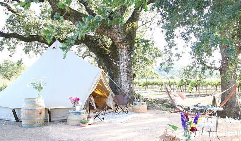 sibley_500_pro_vineyard_shade_tree_1.jpe