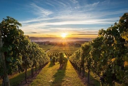 wine_tours.jpeg
