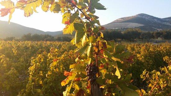 winery-sunset.jpeg