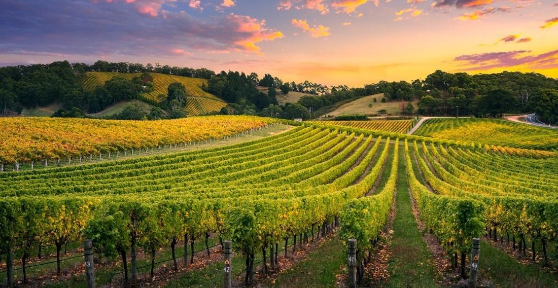 Sussex-vineyard-tours-3.jpeg