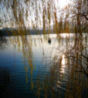 Willow at Su causeway, Hangzhou
