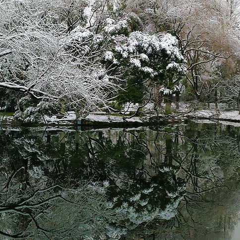 Reflection, Xueshi garden in winter