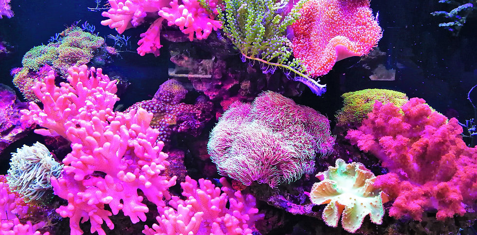 Aquarium at Wulin square, Hangzhou