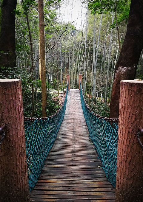 Chain bridge in the forest, Yunqi