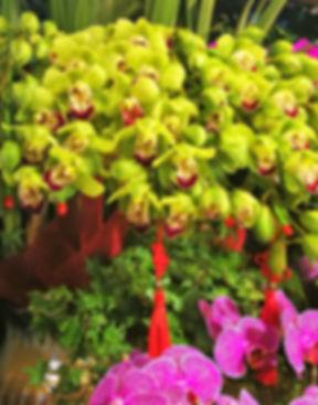 Orchidea, Flower market, Hangzhou