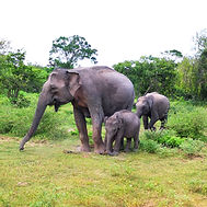 Yala, Sri Lanka