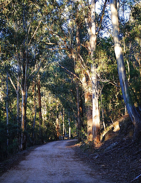 Wollemi National Park, Newnes camping plateau