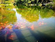 Viewing fish at flower pond, Hangzhou