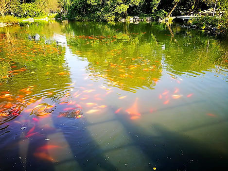 Viewing fish at flower pond, Hangzhou