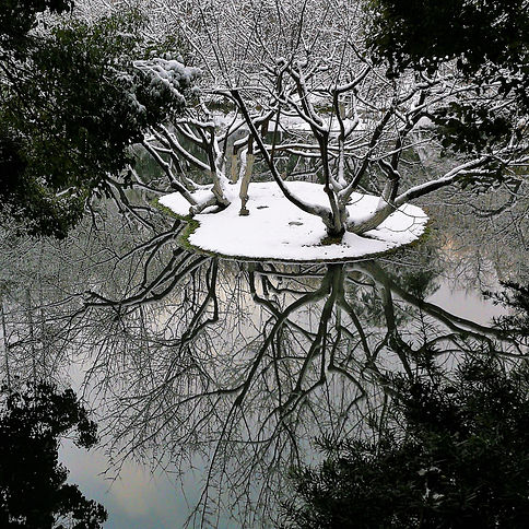 Reflection, Wanilu pond in winter