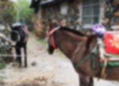 Yuhu village, Lijiang