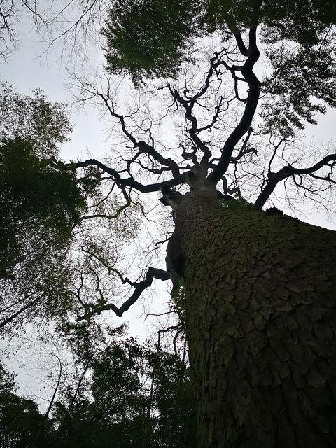 200 years old trees, Yunqi