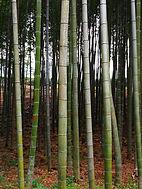 Bamboo path, Yunqi